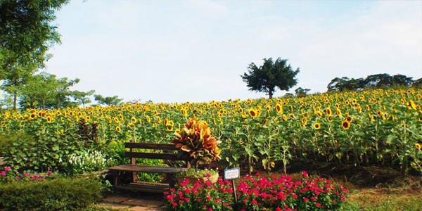 台湾大溪花海农场图片